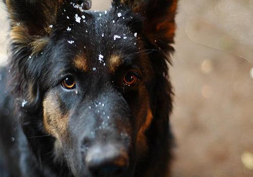 Honden in de winter, waar op te letten?