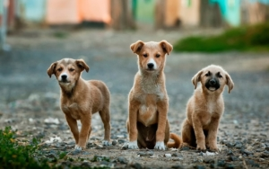 hond uit buitenland halen